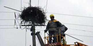 Электроблюз-ДТЭК-зеленый-Оскар
